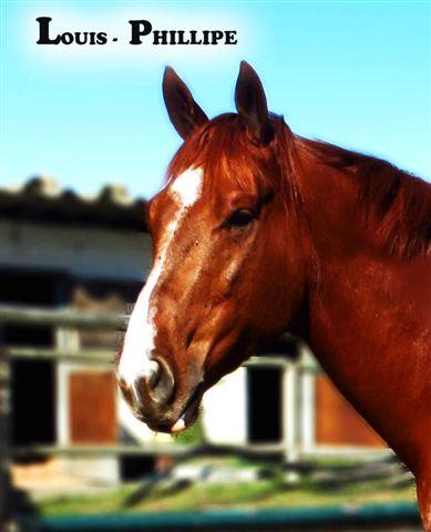 Horses Rehomed