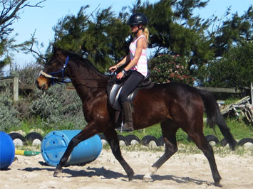 Horses for rehoming My Son Feature