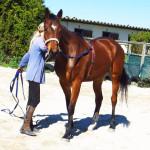 Top Loader Horse